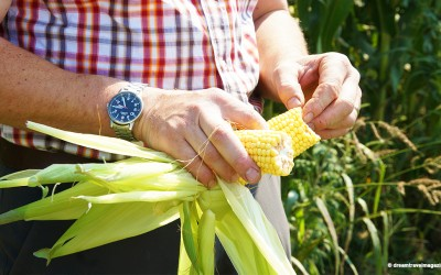 Community Corn Roast – August 8
