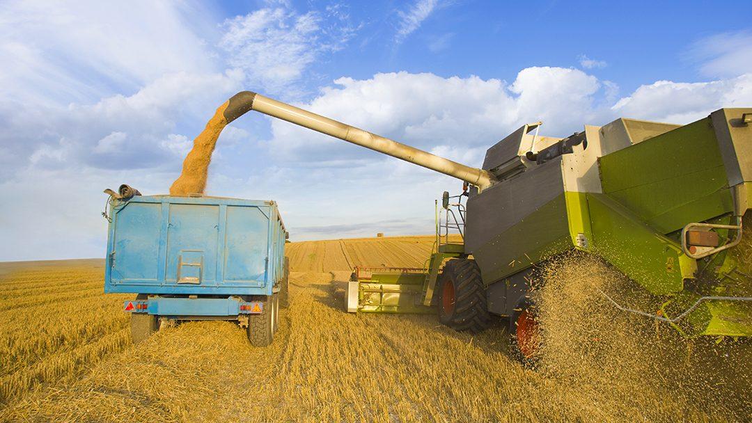 The-Grain-Economy-featured