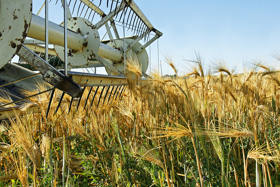 What is Commodity Farming? Wheat harvesting