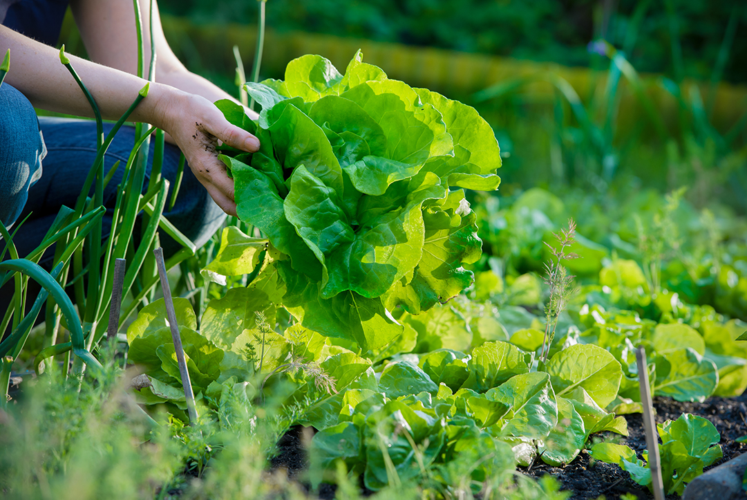 organic farming vs natural farming