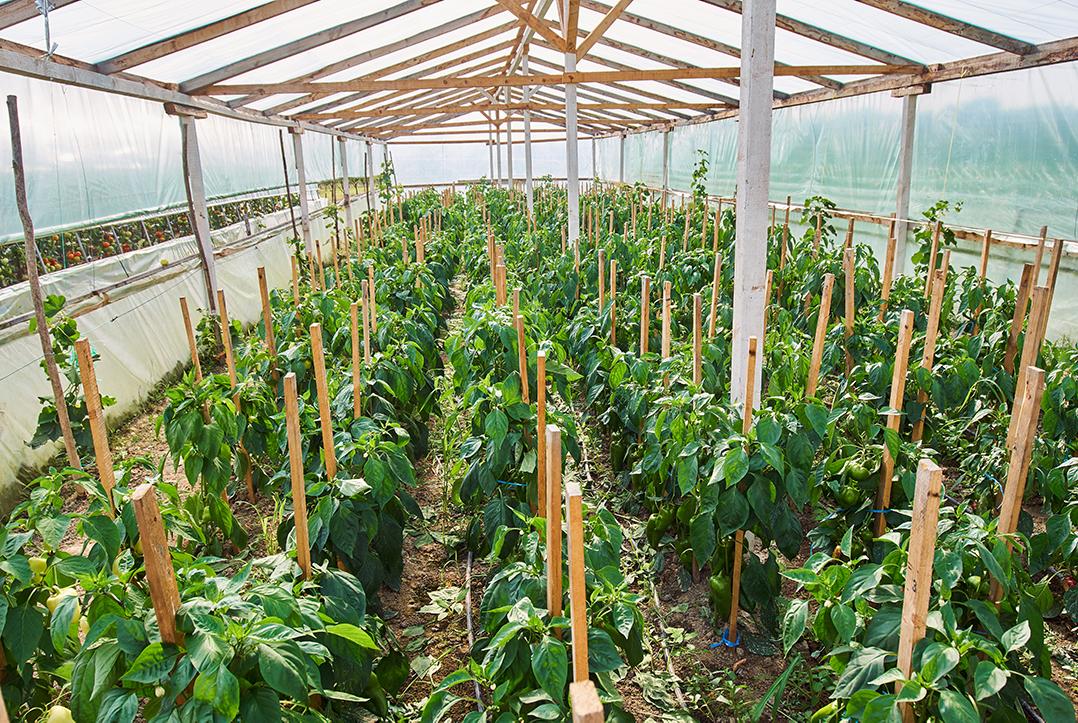 Natural Farming and Organic Farming