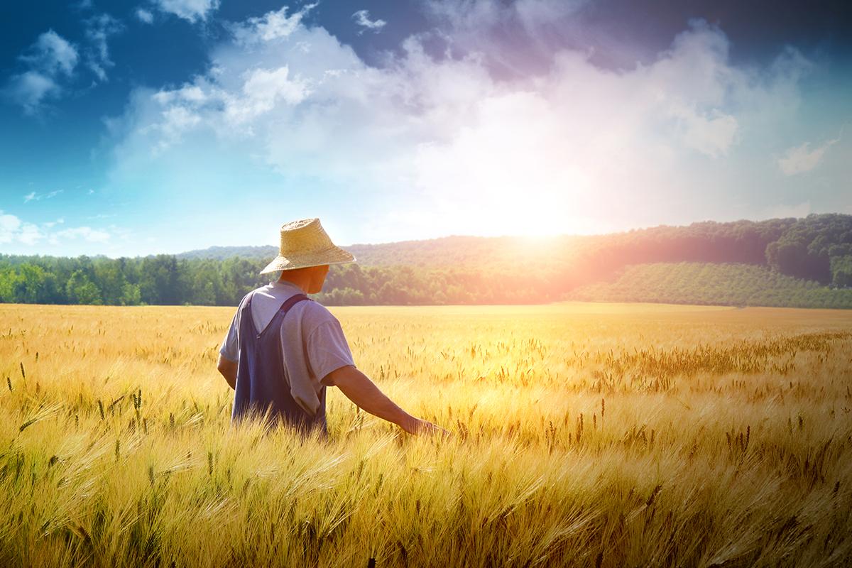 Farmer in field with sun
