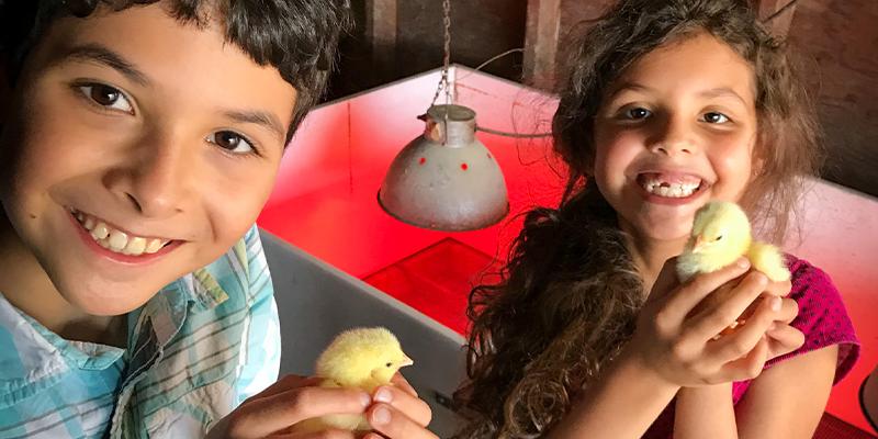 Spence children holding baby chicks