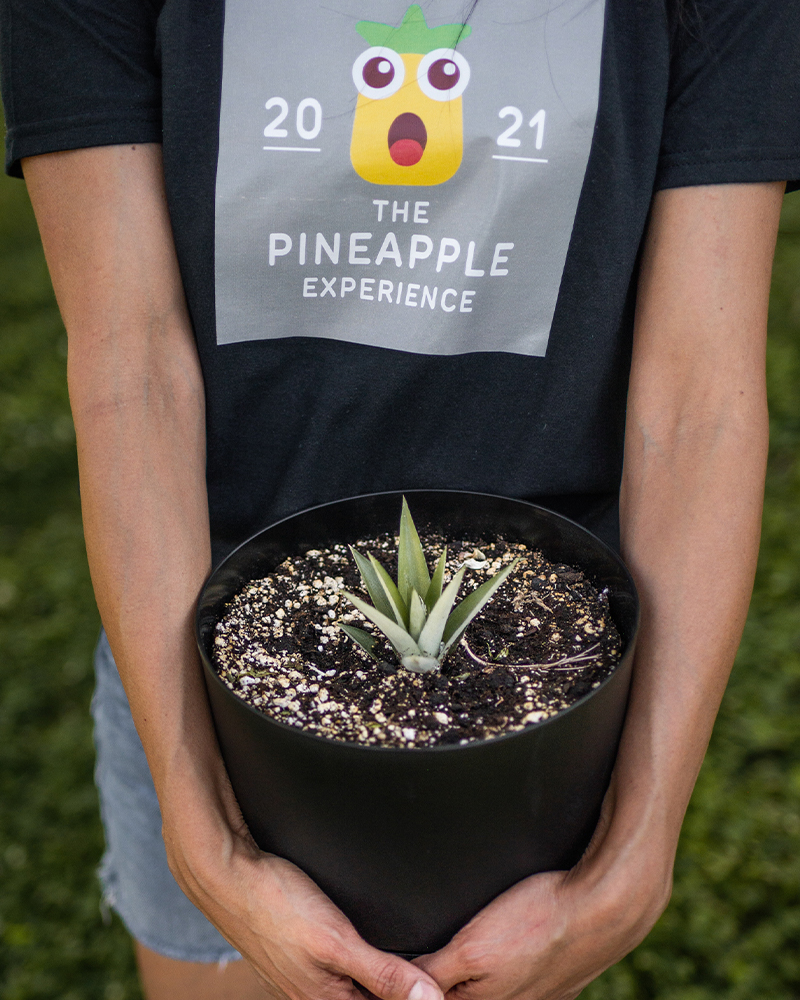 woman holding planted pineapple with shirt the pineapple experience